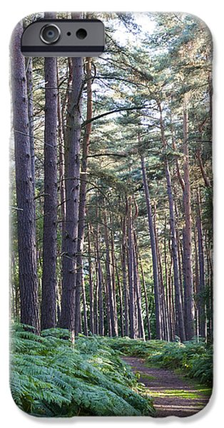Milton Keynes iPhone Cases - Woodland path iPhone Case by David Isaacson