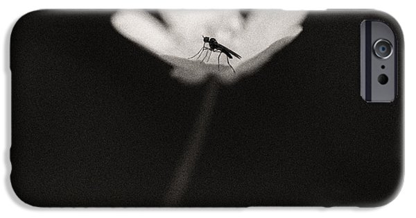 Flies iPhone Cases - Woodland - Study 1 iPhone Case by Dave Bowman