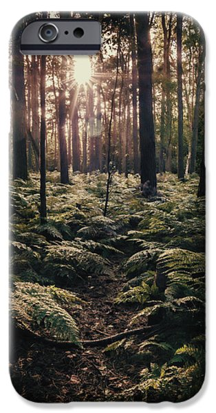 Forest iPhone Cases - Woodland Trees iPhone Case by Amanda And Christopher Elwell