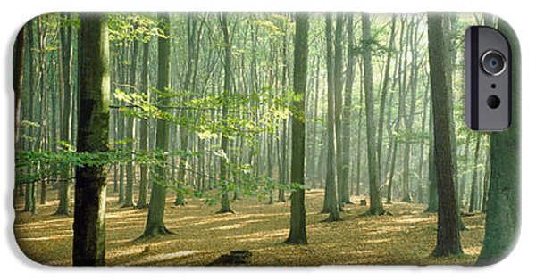 Forest Floor iPhone Cases - Woodlands Near Annweiler Germany iPhone Case by Panoramic Images