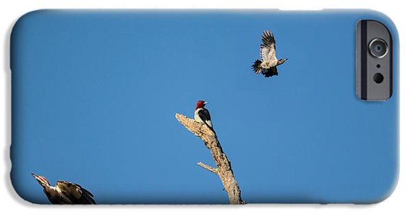 Woodpecker iPhone Cases - Woodpecker Games iPhone Case by Jai Johnson