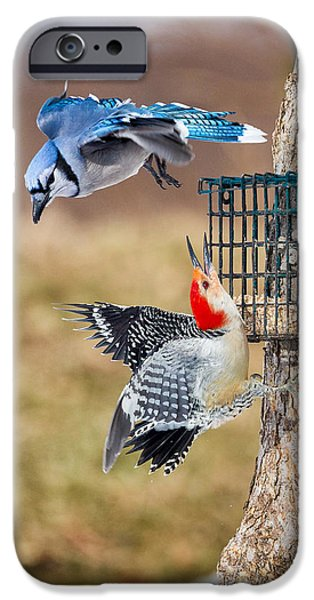 Bluejay iPhone Cases - Woodpeckers and Blue Jays iPhone Case by Bill  Wakeley