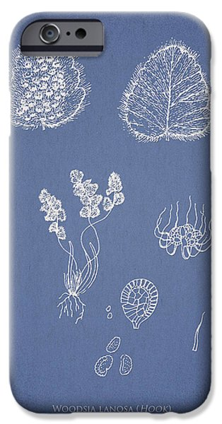 Woodsia lanosa iPhone Case by Aged Pixel