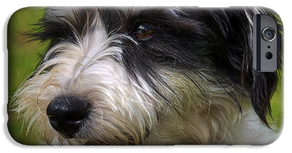Cute Schnauzer iPhone Cases - Woof iPhone Case by Ricky Barnard