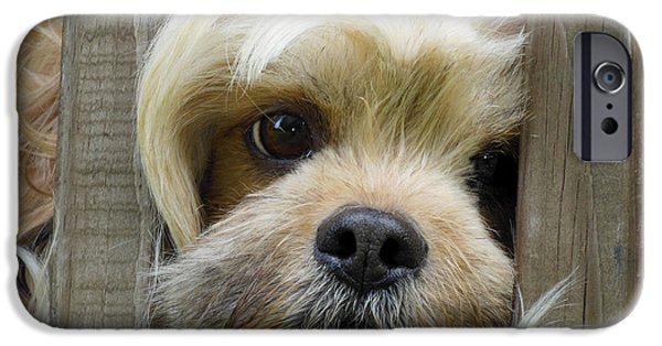 Puppy Digital Art iPhone Cases - Words Cant Express iPhone Case by Robert Orinski