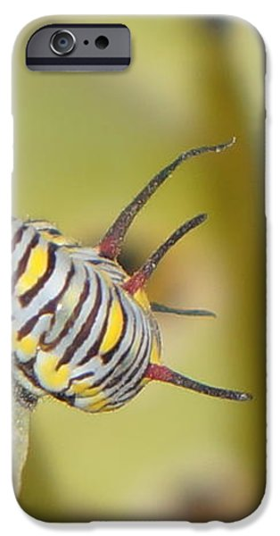 worm iPhone Case by Idris Rabee