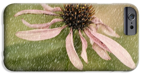 Cone Flower iPhone Cases - Wouldnt It Be Loverly iPhone Case by Lois Bryan