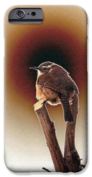 Wren at Sundown iPhone Case by Sue Melvin