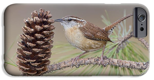 Wren iPhone Cases - Wren in Pine Tree iPhone Case by Bonnie Barry