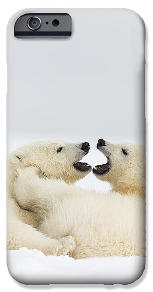 Wrestle iPhone Cases - Wrestling Cubs iPhone Case by Tim Grams