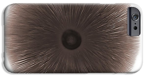 Agaricales iPhone Cases - X-ray Of A Mushroom iPhone Case by Ted Kinsman