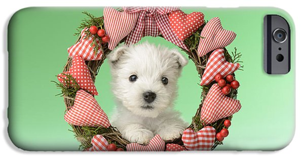 Christmas Eve iPhone Cases - Xmas Reef Puppy iPhone Case by Greg Cuddiford