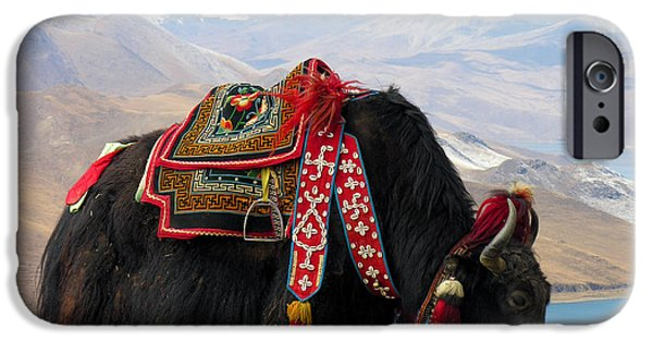 To Dominate iPhone Cases - Yak near Yamdrok lake Tibet iPhone Case by Dennis Jarvis