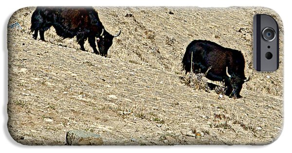 Yak Digital Art iPhone Cases - Yaks in Himalayas along Friendship Highway-Tibet   iPhone Case by Ruth Hager