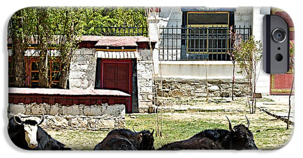 Yak Digital Art iPhone Cases - Yaks on Grounds of Sera Monastery in Lhasa-Tibet  iPhone Case by Ruth Hager