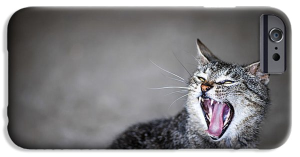 Attitude iPhone Cases - Yawning cat iPhone Case by Elena Elisseeva