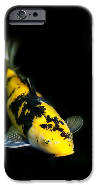 Koi iPhone Cases - Yellow and Black Koi iPhone Case by Rebecca Cozart