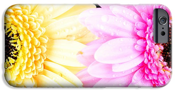 Close Up Floral Mixed Media iPhone Cases - Yellow and pink daisy  iPhone Case by Toppart Sweden