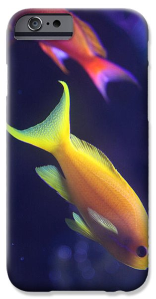 Underwater Photos iPhone Cases - Yellow and Pink Fish iPhone Case by Donna Corless