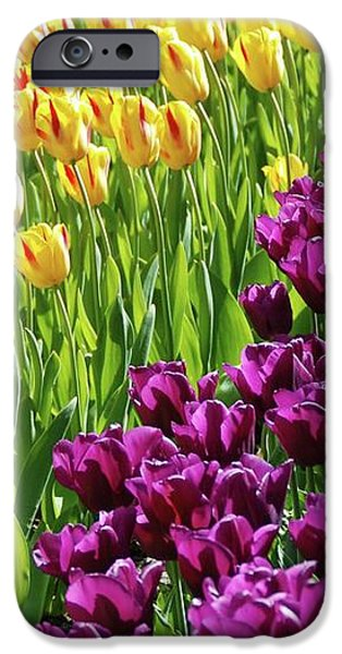 Yellow and Purple Tulips iPhone Case by Allen Beatty