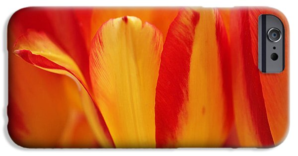 Flora iPhone Cases - Yellow and Red Striped Tulips iPhone Case by Rona Black