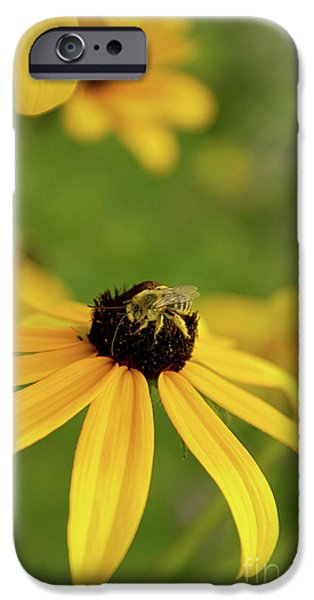 Aimelle Prints iPhone Cases - Yellow Attracts Yellow iPhone Case by Aimelle