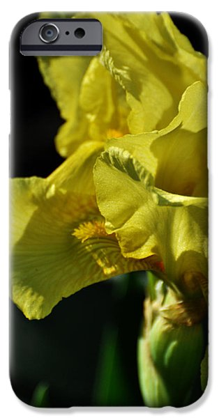 Yellow Bearded Iris iPhone Cases - Yellow Bearded Iris iPhone Case by Rebecca Sherman