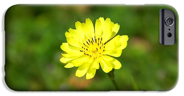 Irvin iPhone Cases - Yellow Beauty  iPhone Case by Jassmine Wolfe