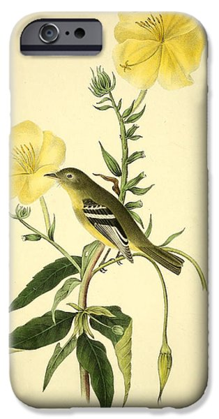 Botanical Drawings iPhone Cases - Yellow-bellied Flycatcher iPhone Case by John James Audubon