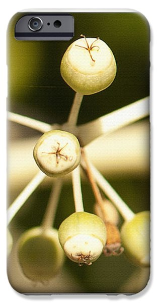 Yellow Berries iPhone Case by Artist and Photographer Laura Wrede