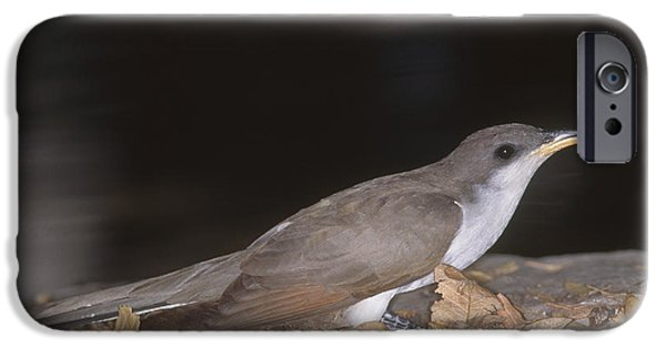 Cuckoo iPhone Cases - Yellow-billed Cuckoo iPhone Case by Gregory G. Dimijian, M.D.