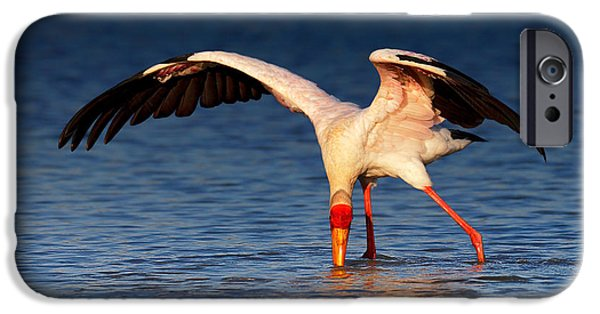 Yellow iPhone Cases - Yellow-billed Stork hunting for food iPhone Case by Johan Swanepoel