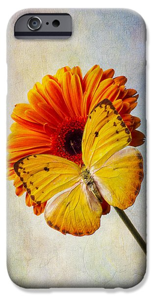 Insects Photographs iPhone Cases - Yellow Butterfly Beauty iPhone Case by Garry Gay