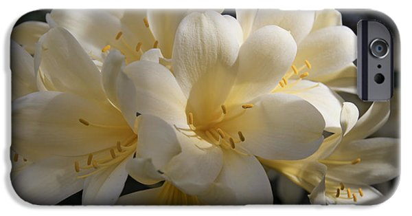 Pericallis iPhone Cases - Yellow Clivia 1004 iPhone Case by Terri Winkler