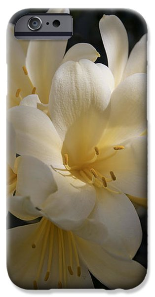 Yellow Clivia 1004 iPhone Case by Terri Winkler