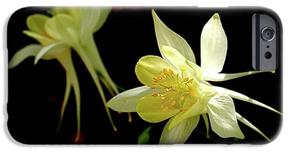 Best Sellers -  - Botanical Photographs iPhone Cases - Yellow Columbine iPhone Case by Rona Black