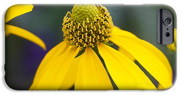 Abstracted Coneflowers iPhone Cases - Yellow Cone Flower Rudbeckia iPhone Case by Rich Franco