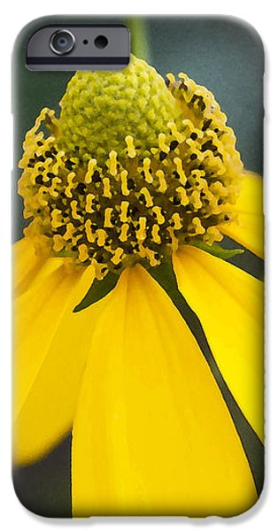 Yellow Cone Flower Rudbeckia iPhone Case by Rich Franco