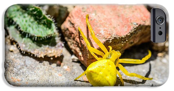 Arachnida iPhone Cases - Yellow Crab Spider iPhone Case by Marco Oliveira