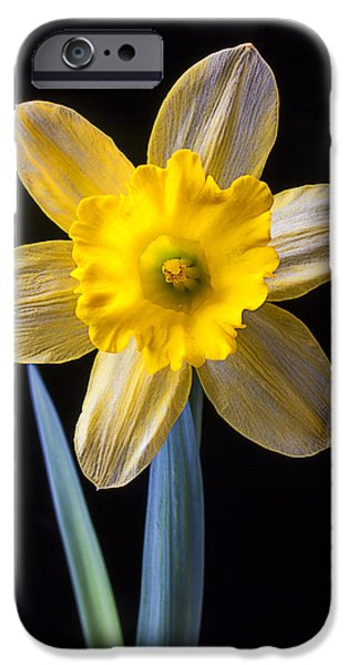Close Up Floral iPhone Cases - Yellow Daffodil iPhone Case by Garry Gay