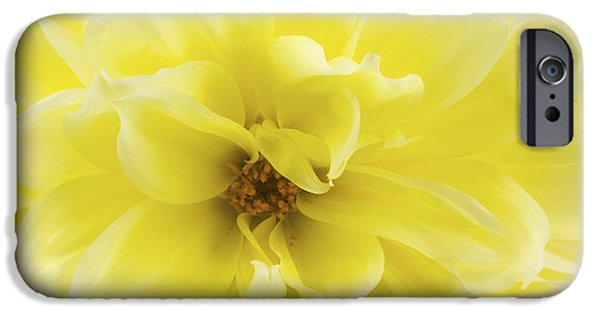 Dahlia iPhone Cases - Yellow Dahlia Flower iPhone Case by Keith Webber Jr