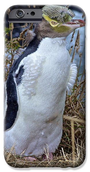 Sea Birds iPhone Cases - Yellow Eyed Penguin Hoiho iPhone Case by Venetia Featherstone-Witty
