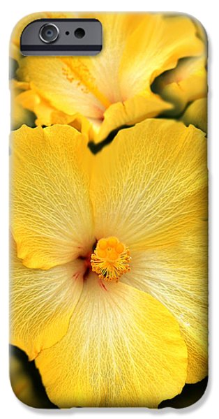 Hibiscus iPhone Cases - Yellow Fantasy Hibiscus Flowers iPhone Case by Jennie Marie Schell