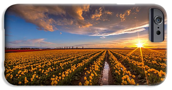 Tulips Photographs iPhone Cases - Yellow Fields and Sunset Skies iPhone Case by Mike Reid
