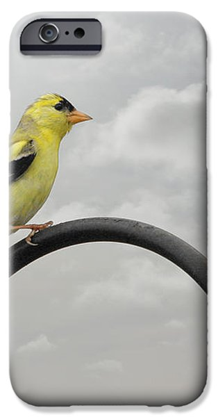 Yellow Finch a bright spot of color iPhone Case by Christine Till