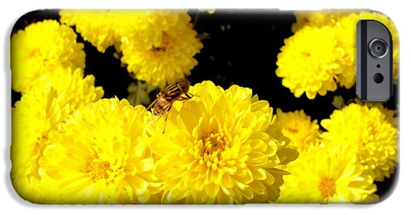 Insect Pyrography iPhone Cases - Yellow Flowers iPhone Case by Debrup Chatterjee