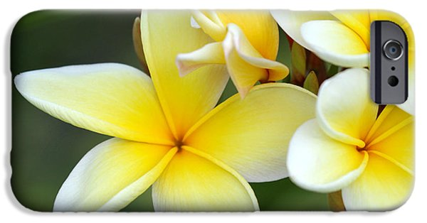 Florida Flowers Photographs iPhone Cases - Yellow Frangipani Flowers iPhone Case by Sabrina L Ryan