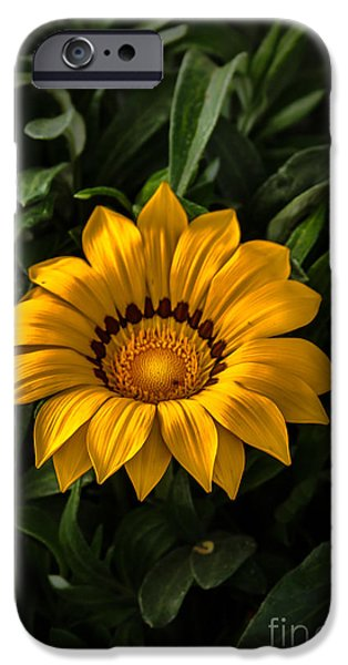 Haybale iPhone Cases - Yellow Gazania iPhone Case by Robert Bales