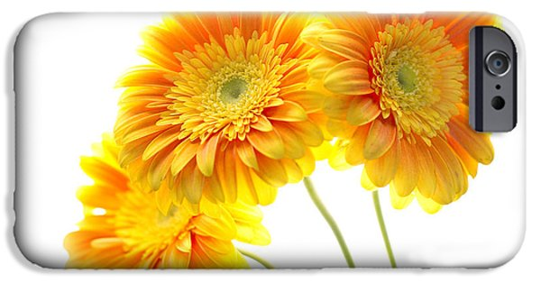 Trio Photographs iPhone Cases - Yellow Gerber Trio iPhone Case by Rebecca Cozart