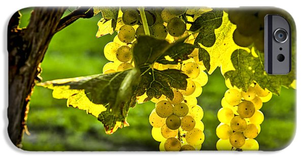 Agricultural iPhone Cases - Yellow grapes in sunshine iPhone Case by Elena Elisseeva